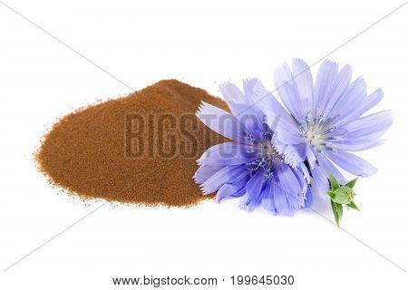 chicory flower and powder of instant chicory isolated on a white background. Cichorium intybus..