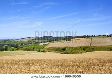 Patchwork Fields And Barley