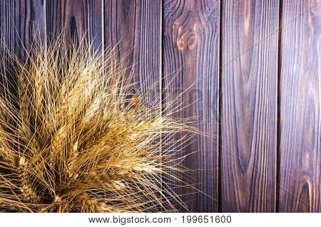 ears of wheat on wooden background Harvest concept