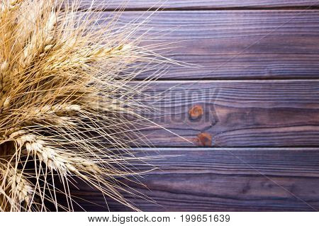 Gold wheat lying on a brown wooden surface