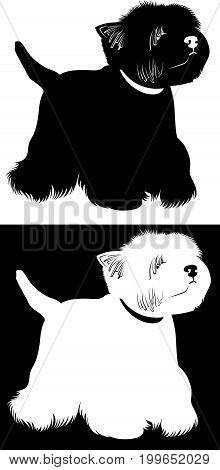 West Highland White Terrier. Dogs West Highland White Terrier