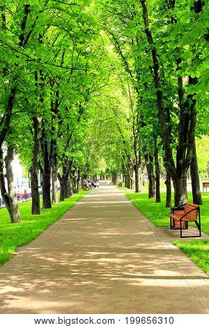 wide footpath in the park with big green trees