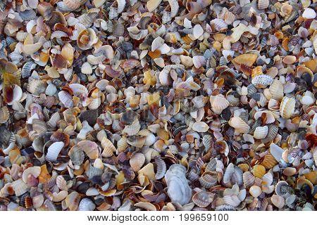 Sea sand background, close up. Beach close-up.Ocean Shells, Conch Shells, Sand texture.