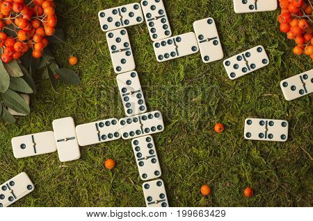 Domino on a background of green grass. Playing dominoes