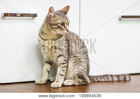 Beautiful domestic cat sitting on the floor. The concept of pets.