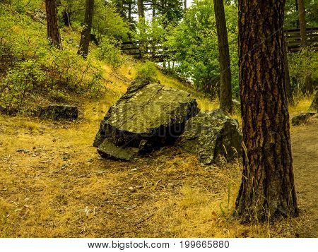 A small rock formation with a few Ponderosa Pine trees