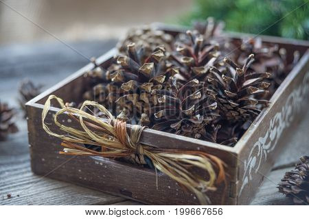 Christmas concept: full wooden box of pine cones and red holly berries and spruce branches on the background of old unpainted wooden boards