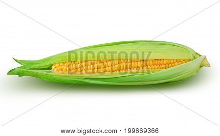 sweet corn isolated on white background with clipping path