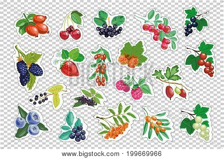 set of berries. vector isolated stock illustration art