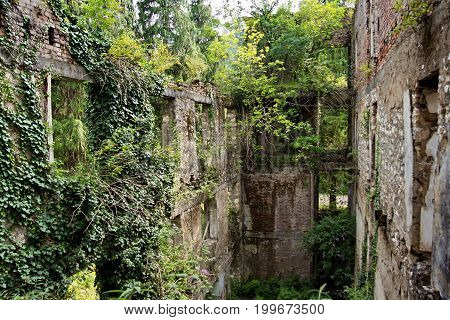 Destroyed by war,overgrown by trees and ivy ruins of apartment house in Tquarchal