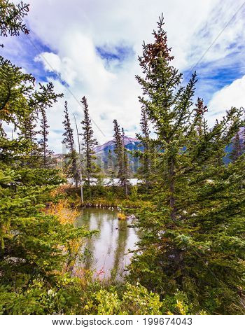 Shallow-water lakes, firs and mountains. The valley along the Pocahontas road. Magnificent journey through the Rocky Mountains of Canada. Concept of active and ecological tourism