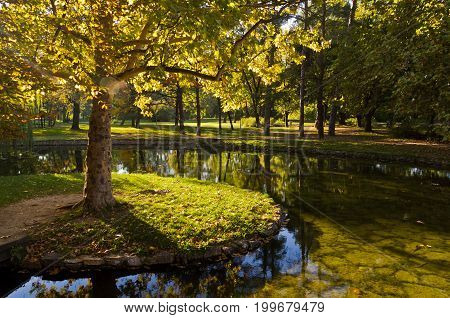 Small island with a tree, pond in Topcider park, Belgrade, Serbia