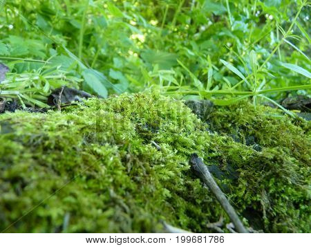 Low Close Up Macro Detail Of Moss And Green Plants
