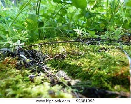 Low Close Up Macro Detail Of Moss And Green Plants In Sun Light