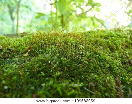 Close Up Macro Detail Of Green Moss