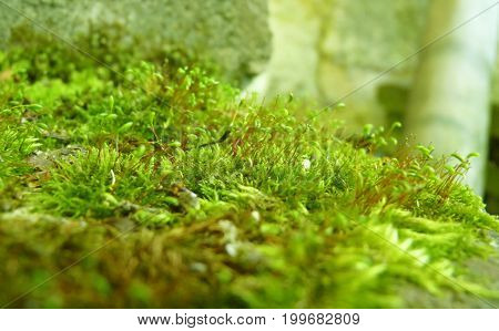 Low Close Up Macro Detail Of Bright Green Moss