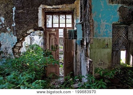 Rotten door in the ruined room of an abandoned building, overgrown with vegetation
