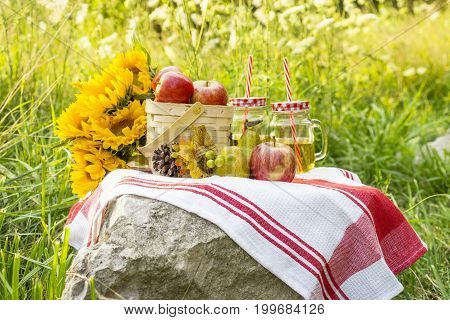 Autumn Picnic Of Small Bushel Of Apples, Juice, Pears With Pinecone And Sunflowers Laid Out On A Roc