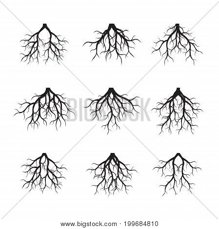 Set of black Roots and graphic elements. Vector Illustration.