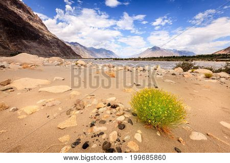 Banks of Nubra River in Nubra Valley in Ladakh region of Kashmir, India