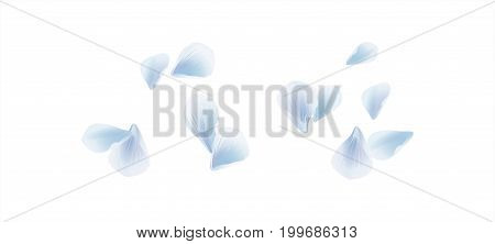 White Blue flying petals isolated on white background. Sakura Roses petals. Vector