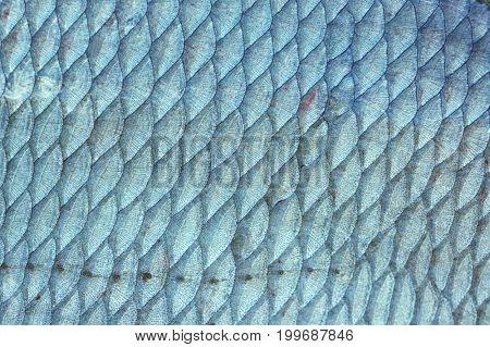 Bream (Abramis Brama) fish scales, natural texture, toned image