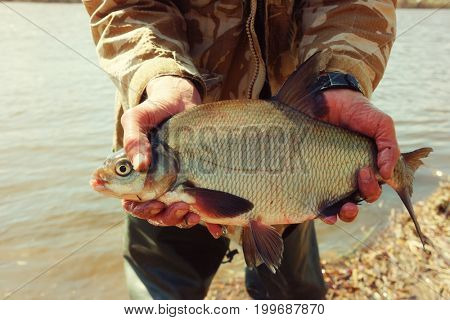 Big bream in fisherman's hand, spring catch in a river, toned image