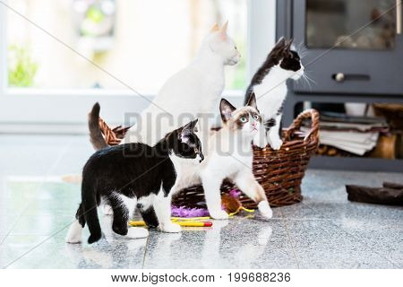 Cute kittens looking with curiosity in apartment