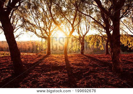 Beautiful golden dry park view in the forest in sunny day warm yellow sunset light fall season
