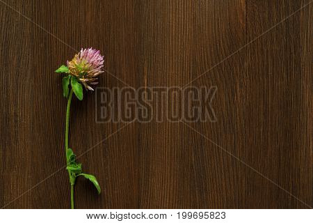 Withered pink clover on brown wooden background