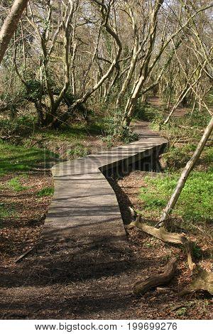 Wooden Boardwalk In Woodland