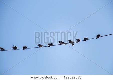 Pigeons Perched On Wire