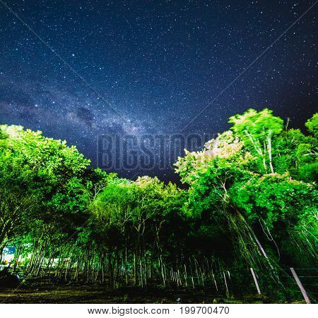 Blue Night Starry Sky Above The Forest.  Night View Of Natural Milky Way Glowing Stars.