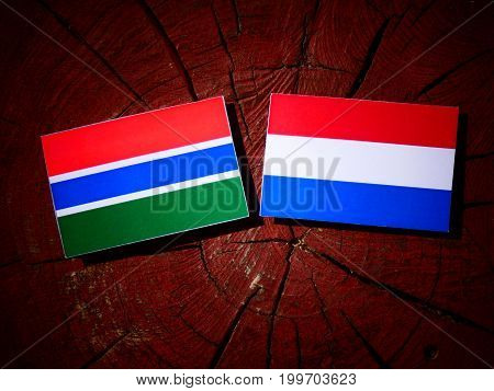 Gambian Flag With Dutch Flag On A Tree Stump Isolated