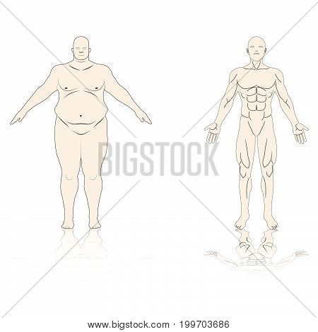 anatomy male fat and muscle shadow reflex isolated background