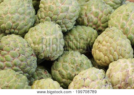 group of green fresh organic custard apple at asia fresh market, sweet taste fruit, backgrounds, tropical climate fruit,