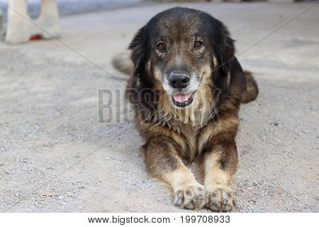 Portrait of lovely dog is lying on floor outdoor.