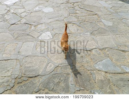Little cat walking in the sunlight with amazing shadow on the stone pave, Mykonos island of Greece