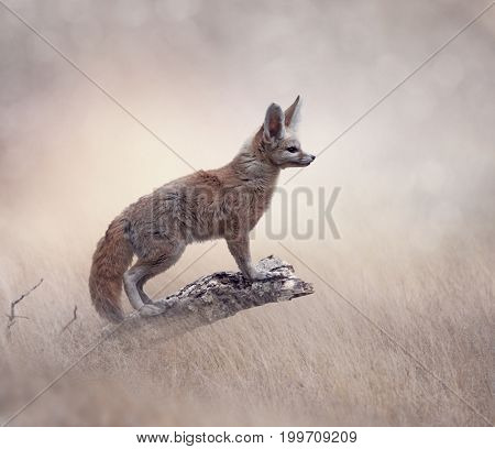 Fennec Fox on a tree in a grassland