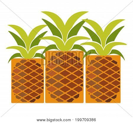 Tropical ripe pineapples with long leaves isolated cartoon vector illustration on white background. Sweet exotic fruit full of vitamins exported from hot countries. Natural product for market.