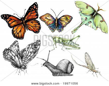 A group of hand drawn insect illustrations poster
