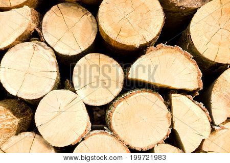 Timber logs stacked on a outdoors lumberyard