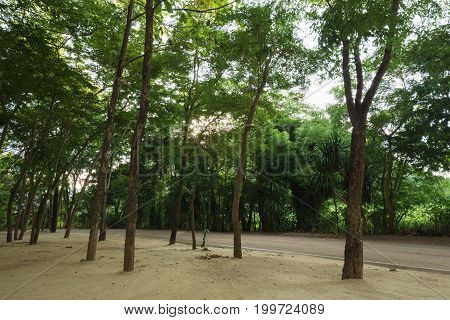 the tree near the asphalt road , Thailand