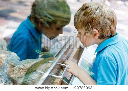 Little kid boy admire Poisonous green snake in terrarium through the glass in zoo.