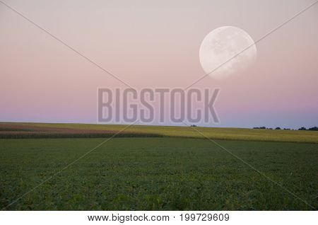 Landscape. Beautiful big moon over the green field.