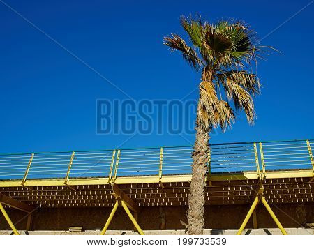 Palm coconut tree on a beautiful beach walkway great sunny tropical vacation image