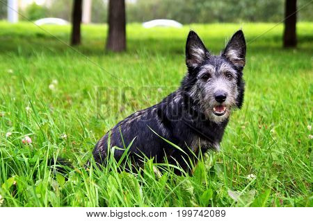 Little Shaggy Puppy Is Sitting On A Grass In A Park.