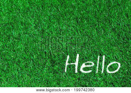 Green grass natural background. hello