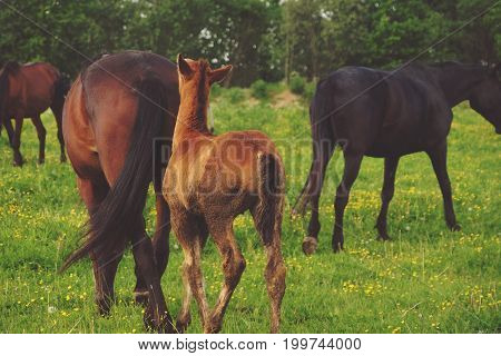 Horse and foal on green grass, summer time