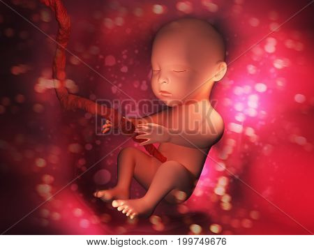 Human embryo inside body 3d illustration image